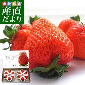 北海道より産地直送 高級いちご 夏瑞(なつみずき)約200g(6粒から7粒)×2パック 化粧箱入り イチゴ 苺 夏イチゴ