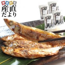 北海道から発送 北海道紋別産 脂たっぷりの美味しいシシャモ(オスメス込)1.2キロ(300g×4P)シシャモ