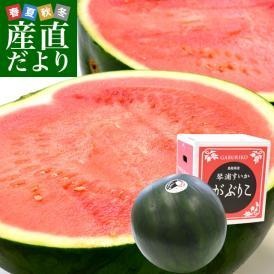 鳥取県から産地発送 JA鳥取中央 琴浦スイカ 「がぶりこ」 秀品 3Lから4L 8キロ以上1玉 すいか 西瓜 送料無料
