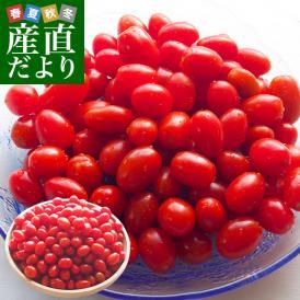 山形県より産地直送 東根市村上農園 村上さんのスナック感覚のミニトマト 1キロ 送料無料 tomato