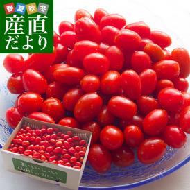 山形県より産地直送 東根市村上農園 村上さんのスナック感覚のミニトマト 2キロ 送料無料 tomato