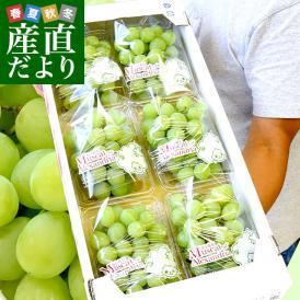 JA全農おかやま協賛 岡山県産 マスカット・オブ・アレキサンドリア 超盛り2.1キロ (約350g×6パック)送料無料 ぶどう