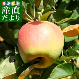 長野県より産地直送 JAながの 志賀高原のぐんま名月 ご家庭用約5キロ (10玉から20玉) 送料無料 林檎 りんご リンゴ めいげつ