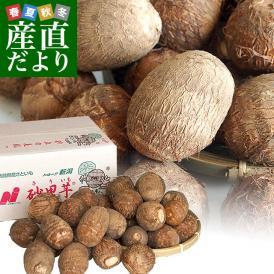 新潟県より産地直送 JA北越後 砂里芋(さりいも) 特大2Lサイズ 2.5キロ (30玉前後) 送料無料 里芋 さといも