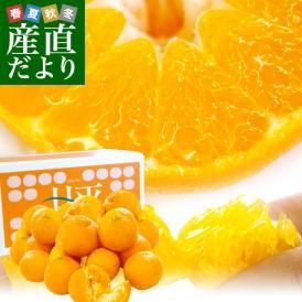 弾けるような粒感と甘み!地元でも、購入できないほど、とっても希少なオレンジ