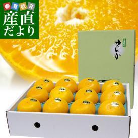 愛媛県より産地直送 JAにしうわ 高級ハウス栽培 せとか 秀品 3LからLサイズ 3キロ化粧箱 (10玉から15玉) 送料無料 セトカ 西宇和 八幡浜
