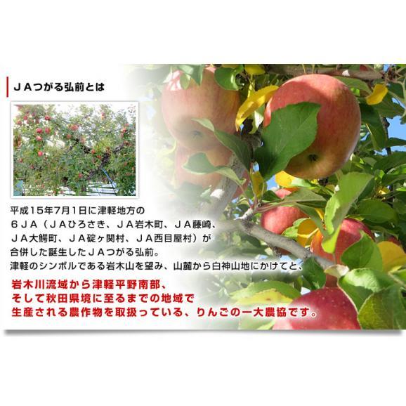 青森県より産地直送 JAつがる弘前 産直りんご 「王林」 3キロ (9玉から13玉) 送料無料 林檎 リンゴ 津軽05