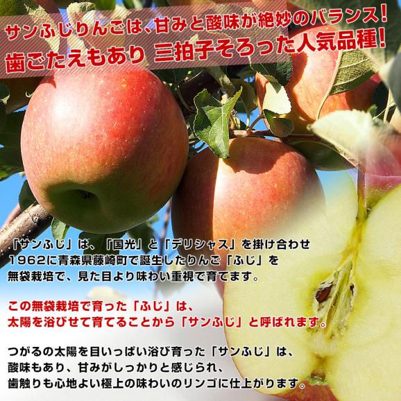 青森県より産地直送 JAつがる弘前 サンふじ 超大玉 5キロ (9玉から10玉) 送料無料 りんご リンゴ 林檎05
