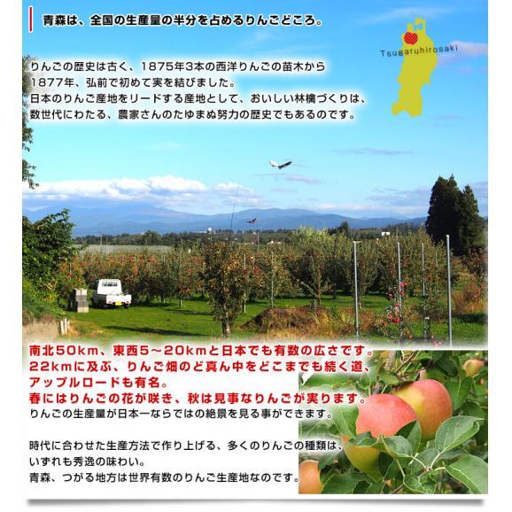青森県より産地直送 JAつがる弘前 サンふじ 超大玉 5キロ (9玉から10玉) 送料無料 りんご リンゴ 林檎06