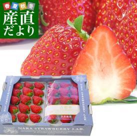 古都奈良を飾る新たな華「古都華」 糖度が高く濃厚な味わいです
