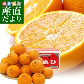 愛媛県より産地直送 JAえひめ南 不知火(しらぬひ)LからMサイズ 5キロ(25玉から30玉前後)しらぬい 柑橘 送料無料