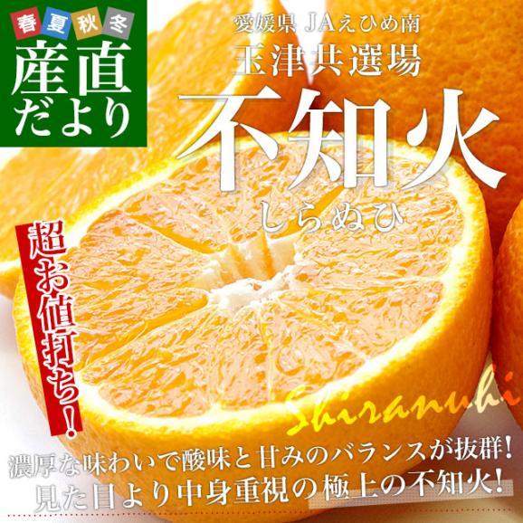 愛媛県より産地直送 JAえひめ南 不知火(しらぬひ)LからMサイズ 5キロ(25玉から30玉前後)しらぬい 柑橘 送料無料02