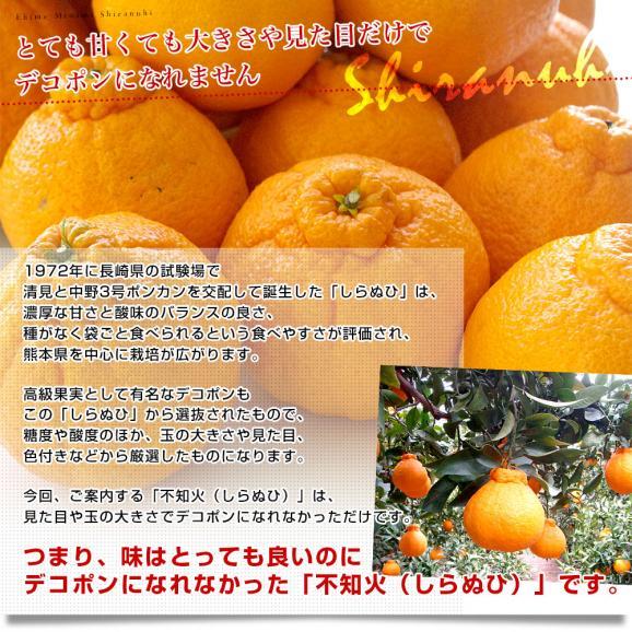 愛媛県より産地直送 JAえひめ南 不知火(しらぬひ)LからMサイズ 5キロ(25玉から30玉前後)しらぬい 柑橘 送料無料04