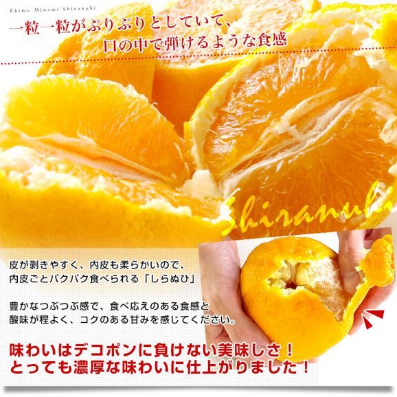 愛媛県より産地直送 JAえひめ南 不知火(しらぬひ)LからMサイズ 5キロ(25玉から30玉前後)しらぬい 柑橘 送料無料05