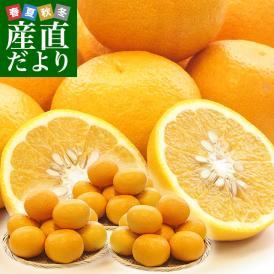 熊本県産 田の浦柑橘組合 甘夏 (あまなつ) 2LからLサイズ 10キロ (24玉から30玉) 送料無料 柑橘 オレンジ あまなつ 市場スポット