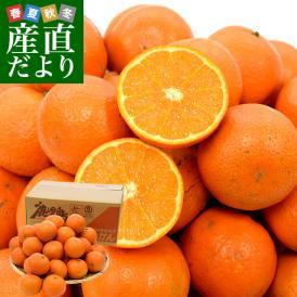 鹿児島県産 JA南さつま 「たんかん」 5キロ LからM (30玉から40玉前後) 送料無料 市場発送 柑橘 オレンジ タンカン 薩摩
