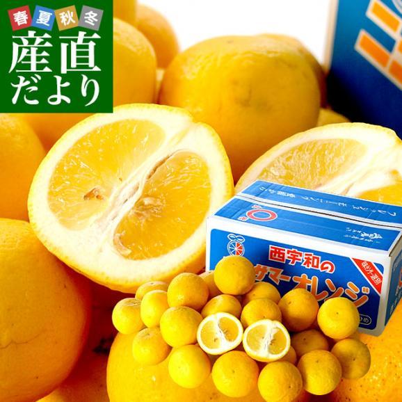 愛媛県より産地直送 JAにしうわ ニューサマーオレンジ 秀品 5キロ(30玉から40玉前後) 送料無料01