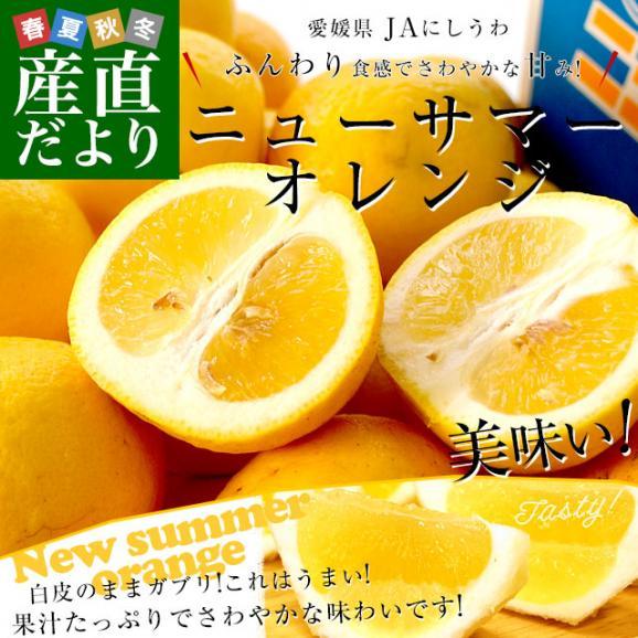 愛媛県より産地直送 JAにしうわ ニューサマーオレンジ 秀品 5キロ(30玉から40玉前後) 送料無料02