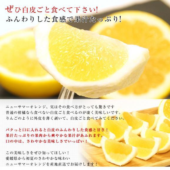 愛媛県より産地直送 JAにしうわ ニューサマーオレンジ 秀品 5キロ(30玉から40玉前後) 送料無料04