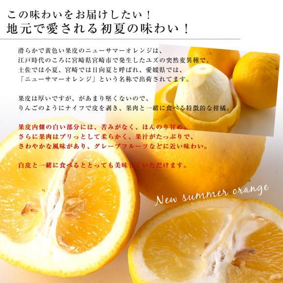 愛媛県より産地直送 JAにしうわ ニューサマーオレンジ 秀品 5キロ(30玉から40玉前後) 送料無料05