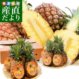 台湾産 台湾パイナップル(台農17号)園地限定品・原体箱 約10キロ(5玉から10玉入り)市場発送商品 送料無料