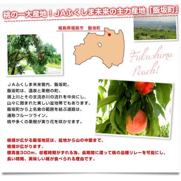 福島県より産地直送 JAふくしま未来 秀品桃 ミスピーチ 約2キロ×2箱セット   (5玉から9玉×2箱) 送料無料 もも 桃06