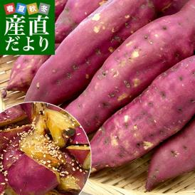 高知県産 JA高知県 土佐紅 A級品MからLサイズ5キロ 18本前後 送料無料 とさべに さつまいも サツマイモ 薩摩芋 新芋 市場発送
