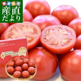 北海道産 JAながぬま フルーツトマト MまたはLサイズ 約900g (9~12玉入り) 送料無料 とまと 高糖度 市場発送