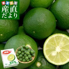徳島県産 JA全農とくしま すだち 秀品2Lサイズ1キロ 40個前後 送料無料 スダチ 香酸柑橘 薬味 市場発送