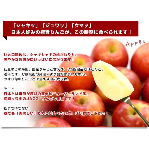 ニュージーランド産 JAZZりんご(品種:サイフレッシュ)約2キロ(11から15玉入)リンゴ 林檎 送料無料 市場発送04