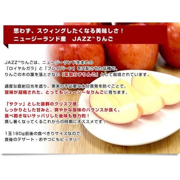 ニュージーランド産 JAZZりんご(品種:サイフレッシュ)約2キロ(11から15玉入)リンゴ 林檎 送料無料 市場発送05