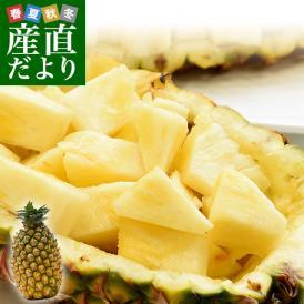台湾産 超高糖度 台湾パイナップル 大玉1玉化粧箱(約1.5キロ)送料無料 クール便 パイン パイナップル パインアップル 台湾パイン