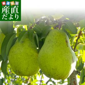 山形県より産地直送 洋梨 バラード ご家庭用 5キロ(8玉から18玉) 洋梨 洋なし 洋ナシ