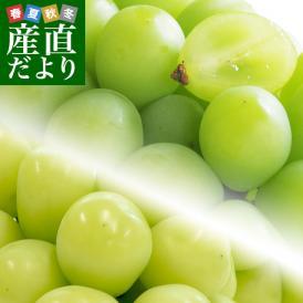 岡山県産 高級マスカット2種セット シャインマスカット(600g前後)&アレキサンドリア(500g前後)計2房+マスキャット(ぬいぐるみ)のおまけ付 送料無料 市場発送 ブドウ ぶどう 葡萄