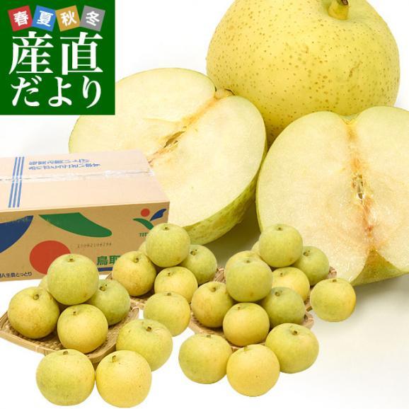 鳥取県産 JA全農とっとり 二十世紀梨 秀品10キロ(28玉から32玉)なし ナシ 20世紀 送料無料 市場発送01