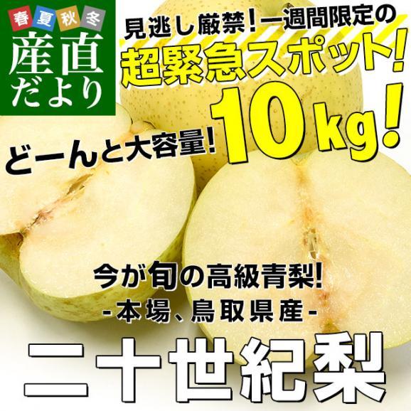 鳥取県産 JA全農とっとり 二十世紀梨 秀品10キロ(28玉から32玉)なし ナシ 20世紀 送料無料 市場発送02