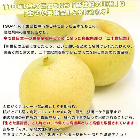 鳥取県産 JA全農とっとり 二十世紀梨 秀品10キロ(28玉から32玉)なし ナシ 20世紀 送料無料 市場発送05