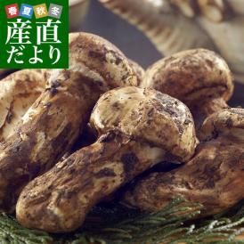 国産松茸(つぼみ)400g前後(4~8本前後) 送料無料 まつたけ マツタケ 市場発送