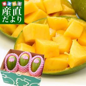 一瞬の美味。激甘!超レア品の高糖度のマンゴーが登場!