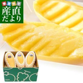 タイ産マンゴー ナンドクマイ 大玉厳選 1キロ(3玉入)送料無料 マンゴー トロピカルフルーツ