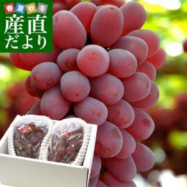 大粒、種なし、高糖度の紫紅色ぶどう
