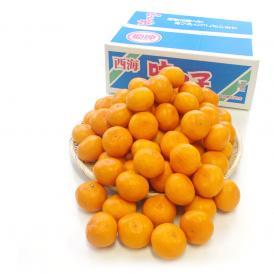 送料無料 長崎県産 JAながさき西海 西海みかん 味っ子 SSサイズ 3キロ (秀品) みかん、早生みかん
