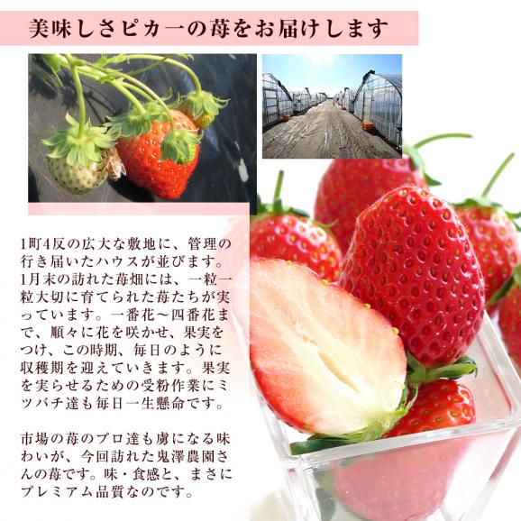 茨城県産 鬼澤農園 ステビア栽培 栃乙女 Aから3Lサイズ 300g×4パック入り 合計1.2キロ以上 送料無料 いちご 苺04