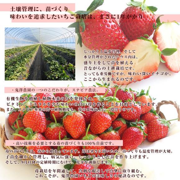 茨城県産 鬼澤農園 ステビア栽培 栃乙女 Aから3Lサイズ 300g×4パック入り 合計1.2キロ以上 送料無料 いちご 苺05