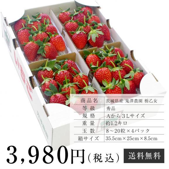 茨城県産 鬼澤農園 ステビア栽培 栃乙女 Aから3Lサイズ 300g×4パック入り 合計1.2キロ以上 送料無料 いちご 苺06