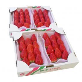 栃木県産 スカイベリー DXタイプ 2箱 合計1.2キロ (300g×4パック)  (6粒から12粒×4P) 送料無料 いちご 苺