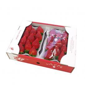 送料無料 佐賀県産 新ブランドいちご いちごさん 秀品 3Lから2Lサイズ (270g×2P) イチゴ 苺