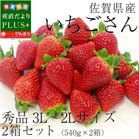 佐賀県産 新ブランド苺 いちごさん 秀品 3Lから2Lサイズ 2箱セット  (約540g×2箱) 送料無料 イチゴ02