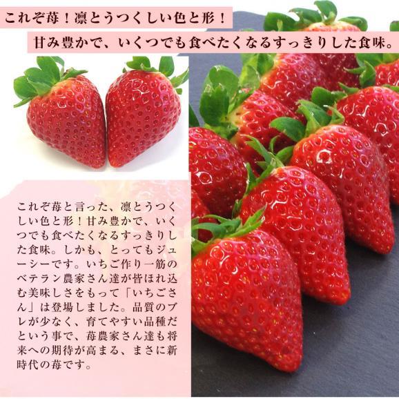 佐賀県産 新ブランド苺 いちごさん 秀品 3Lから2Lサイズ 2箱セット  (約540g×2箱) 送料無料 イチゴ04