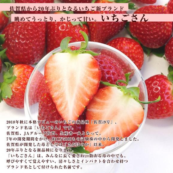 佐賀県産 新ブランド苺 いちごさん 秀品 3Lから2Lサイズ 2箱セット  (約540g×2箱) 送料無料 イチゴ05